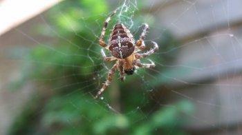 Spin neemt Britse school over
