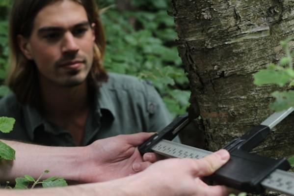 Hoe word je boswachter?